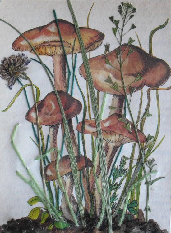 mushroom collage postcard
