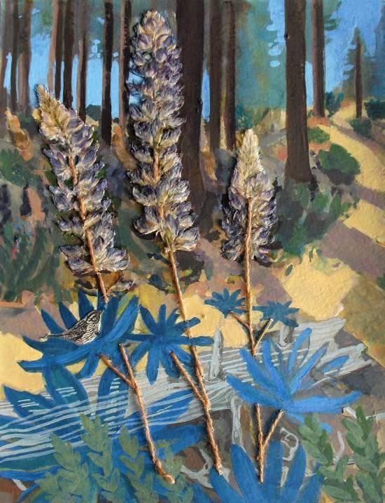 mt tallac trail lake tahoe california lupine flowers