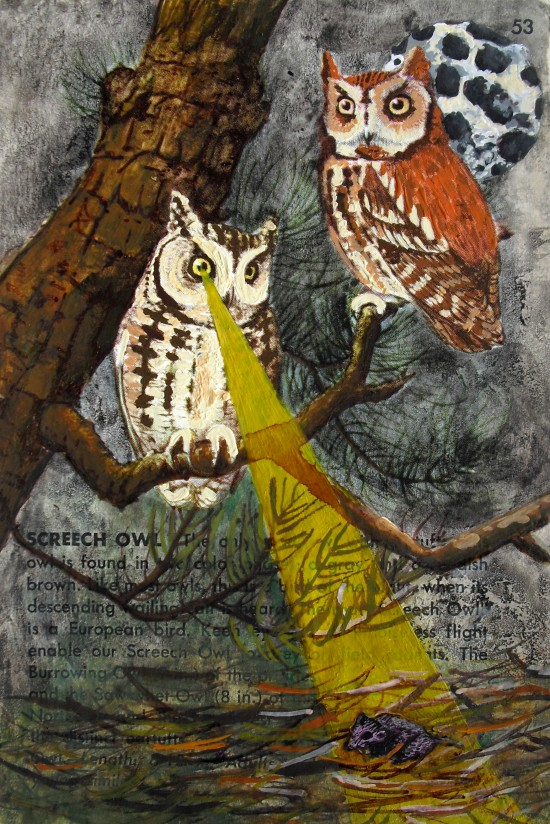 owls birds postcard books field guide screech owl hunting night mouse