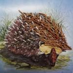 hedgehog leaves