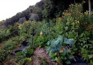 garden permaportugal